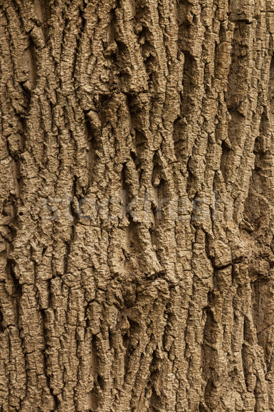 Bark Texture Stock photo © rghenry
