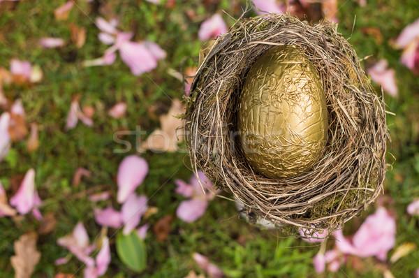Złote jajka gniazdo jeden złoty finansów Zdjęcia stock © rghenry