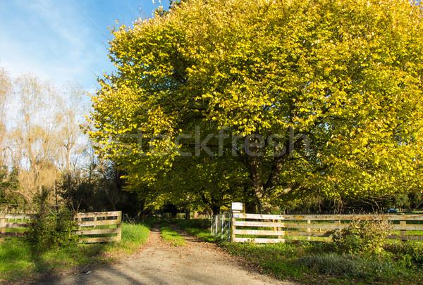 ősz kocsifelhajtó csodálatos nagy fák lefelé Stock fotó © rghenry