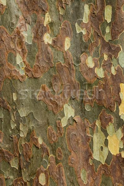 Színek ugatás csodálatos folt néz fa Stock fotó © rghenry