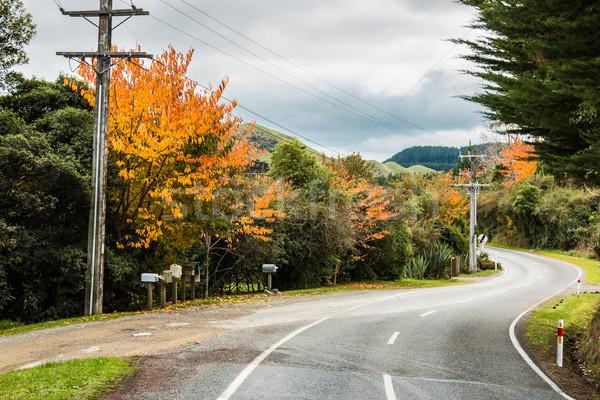 Najaar weg kleuren landschap New Zealand Stockfoto © rghenry