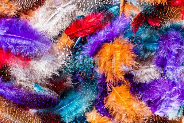 Soft Color Feathers Stock photo © rghenry