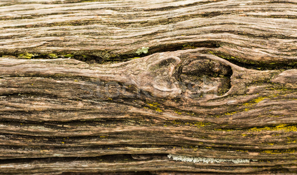 Rough Wood Grain Stock photo © rghenry