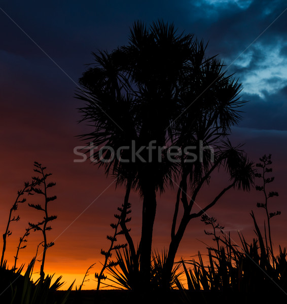 Flax & Cabbage Tees Sunset Stock photo © rghenry