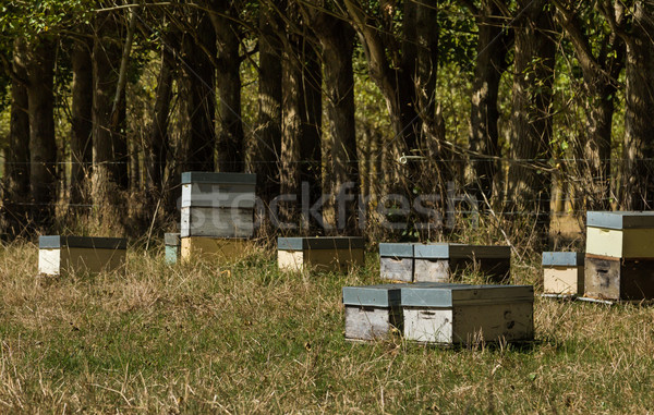 Bee Hives Stock photo © rghenry