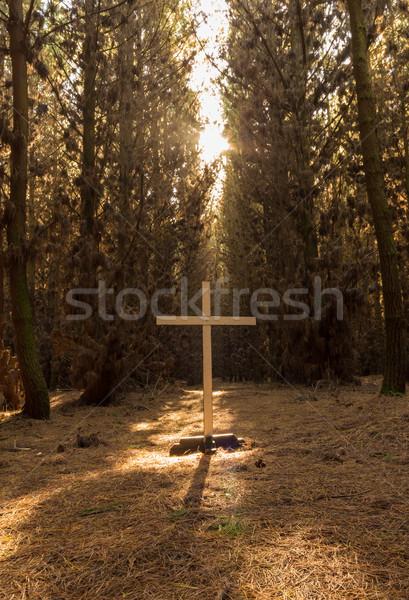 Drzewo zbawienie biały krzyż lasu świetle Zdjęcia stock © rghenry
