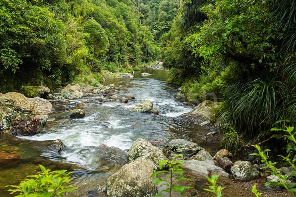 Córrego belo Nova Zelândia o melhor nativo Foto stock © rghenry