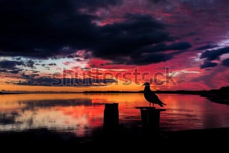 Stock photo: Birds in Love