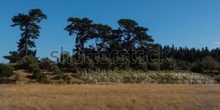 Borító szőlő nyár védelmez űrlap madarak Stock fotó © rghenry
