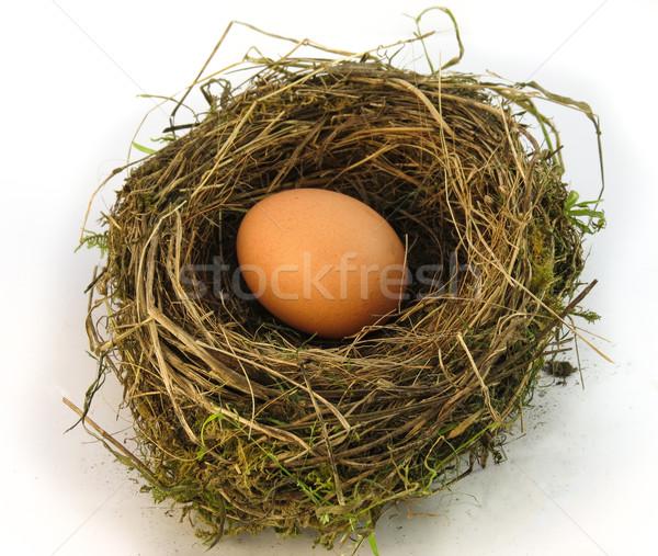 Stock photo: Big Nest Egg