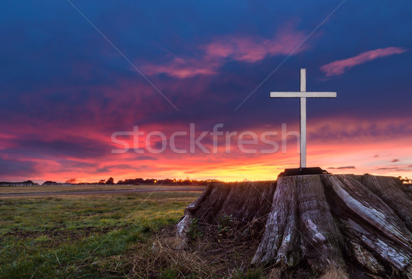 White Stump Cross Stock photo © rghenry