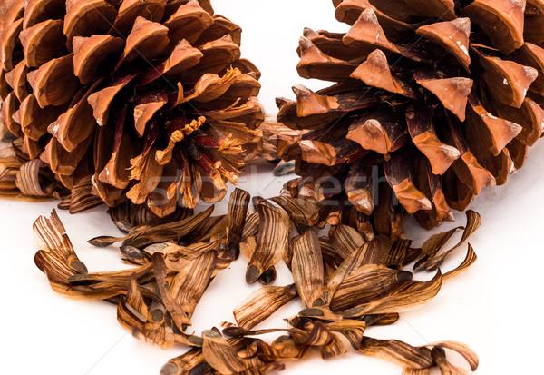 çam tohumları iki açmak ağaç doğa Stok fotoğraf © rghenry