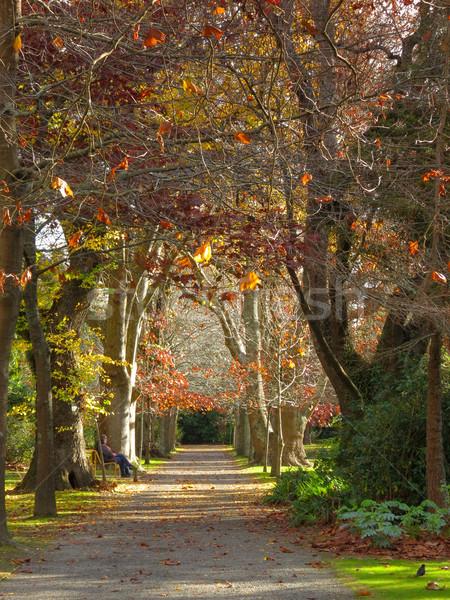 Autumn Walkway Stock photo © rghenry