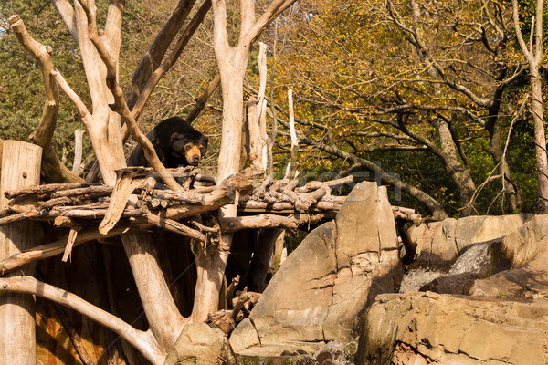 Sun Bear Home Stock photo © rghenry