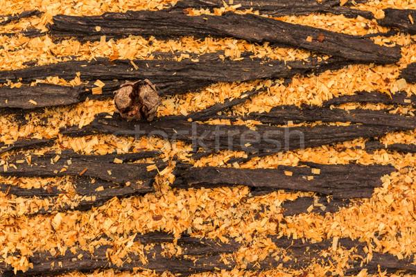 Cupressus macrocarpa Bark Pod Stock photo © rghenry