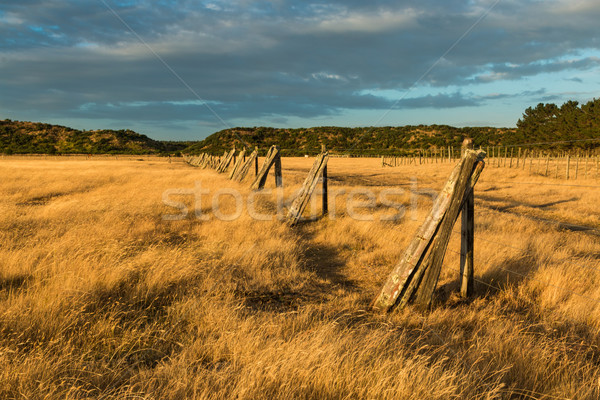 Fence Posts Line Stock photo © rghenry