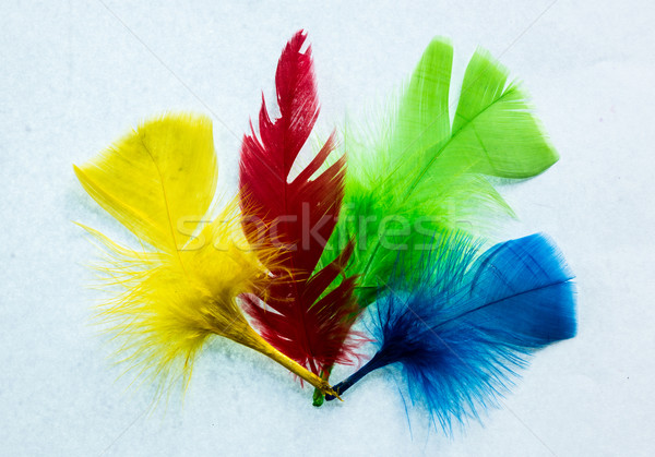 Four Colors Feathers Stock photo © rghenry