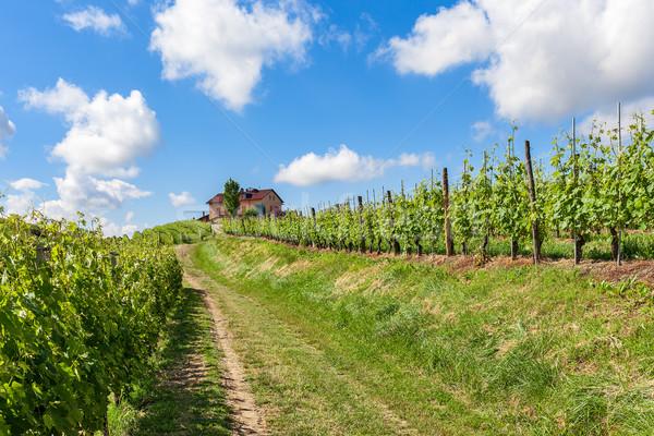 Green vineyards of Piedmont. Stock photo © rglinsky77