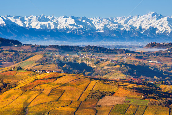 Autumnal hills and snowy mountains in Piedmont, Italy. Stock photo © rglinsky77
