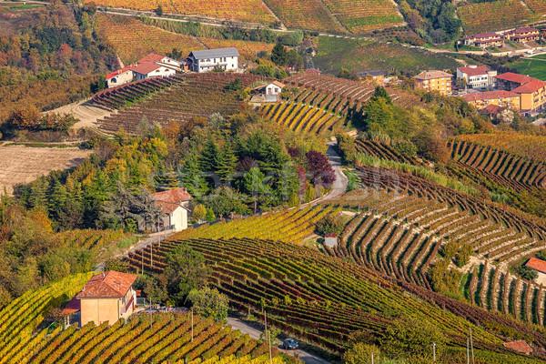 Autumnal vineyards in Piedmont, Italy. Stock photo © rglinsky77