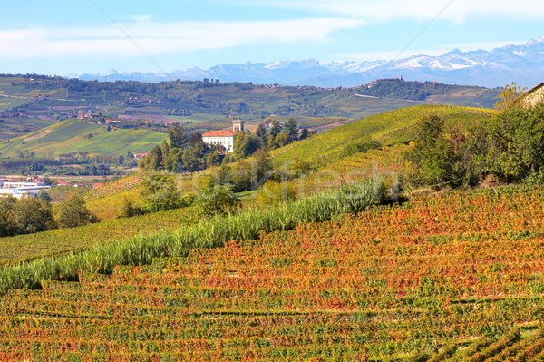 Autumnal view on vineyards in Piedmont, Italy. Stock photo © rglinsky77