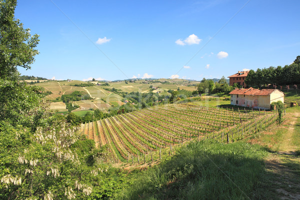 Hills and vineyards of Piedmont, northern Italy. Stock photo © rglinsky77