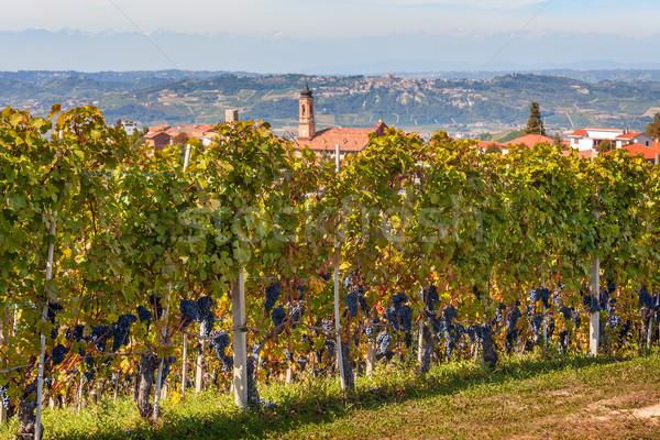 İtalya sonbahar olgun üzüm kuzey Stok fotoğraf © rglinsky77