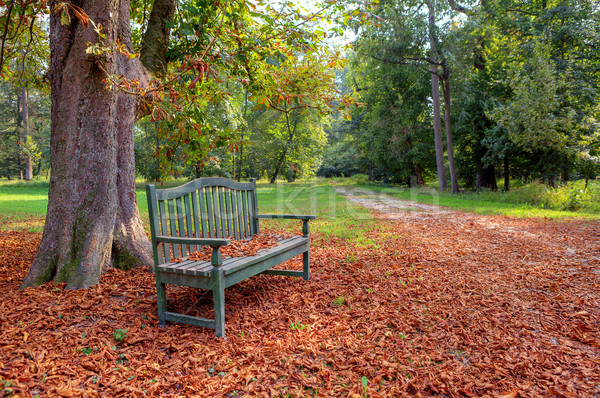 Bank sonbahar park ağaç kapalı Stok fotoğraf © rglinsky77