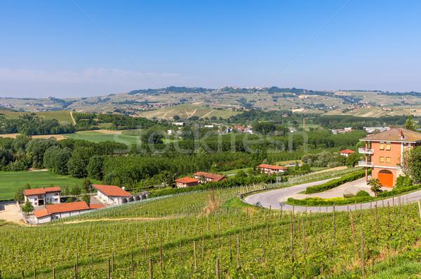 Green vineyard of Piedmont, Italy. Stock photo © rglinsky77