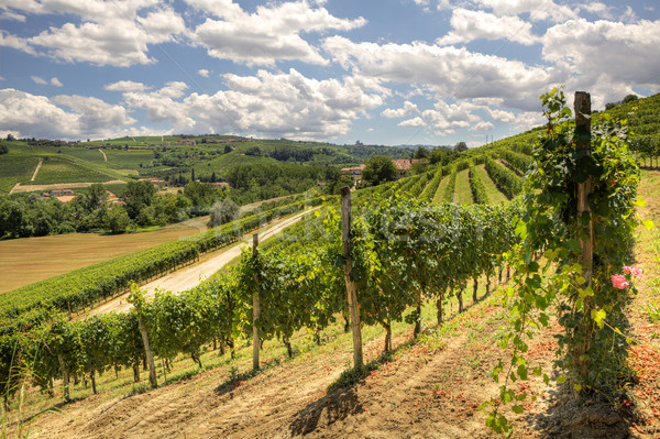 Hills and vineyards of Piedmont. Stock photo © rglinsky77