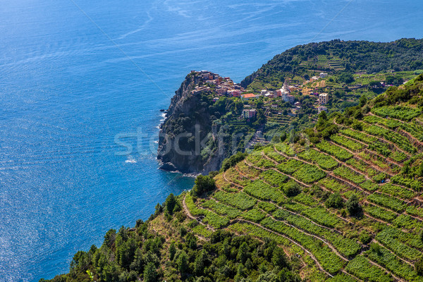 Terraced vineyards and Mediterranean sea in Italy. Stock photo © rglinsky77