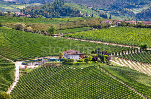 Winery vert colline Italie nord arbre Photo stock © rglinsky77