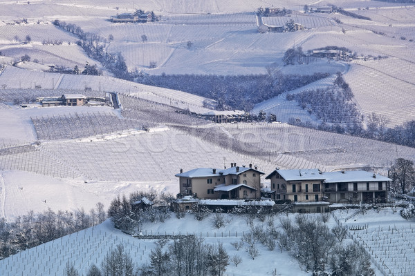 Hills and vineyards of Piedmont covered with snow. Stock photo © rglinsky77