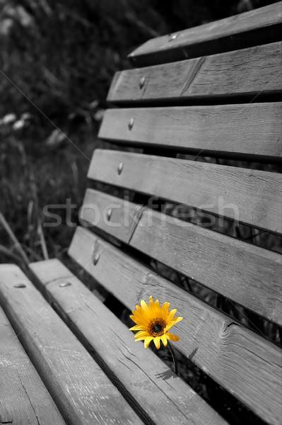 Amarelo camomila vertical imagem crescer Foto stock © rglinsky77