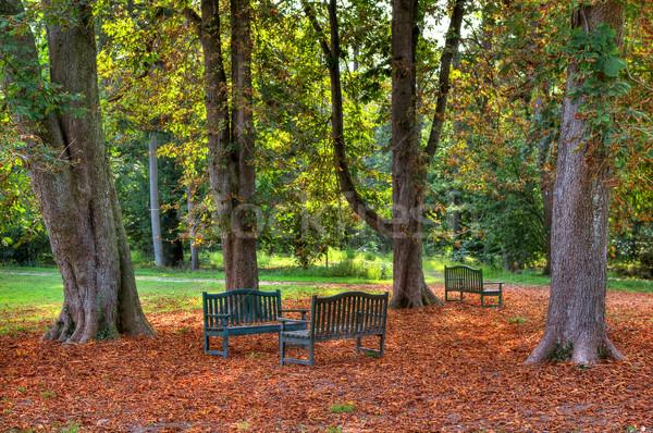 üç sonbahar park ağaçlar zemin kapalı Stok fotoğraf © rglinsky77