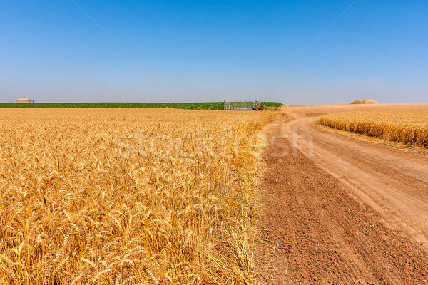 Country road and rural wheat fields.  Stock photo © rglinsky77