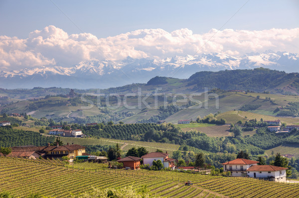 View on hills and vineyards of Piedmont, northern Italy. Stock photo © rglinsky77