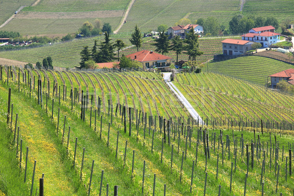 Vineyards of Piedmont at spring. Northern Italy. Stock photo © rglinsky77