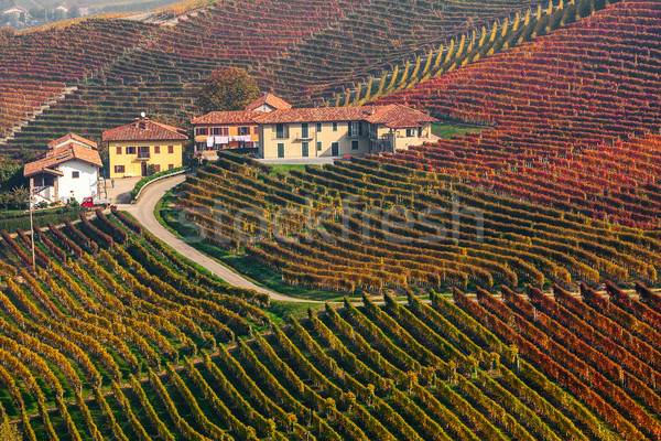 Colorful autumnal vineyards in Italy. Stock photo © rglinsky77