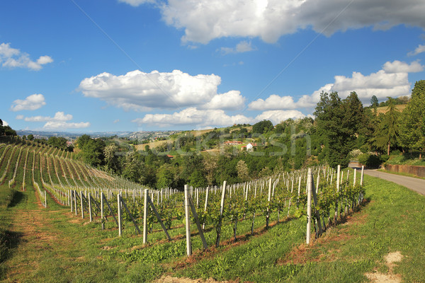 Hills and vineyards of Piedmont. Northern Italy. Stock photo © rglinsky77