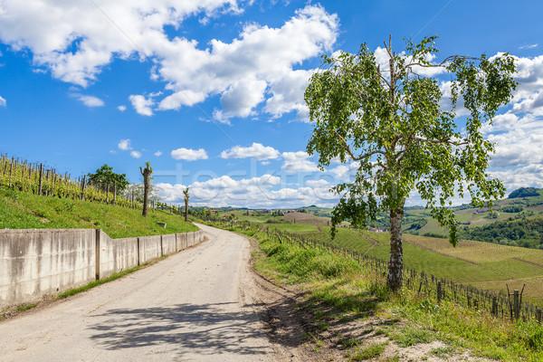 Rurale strada cielo blu Italia albero verde Foto d'archivio © rglinsky77