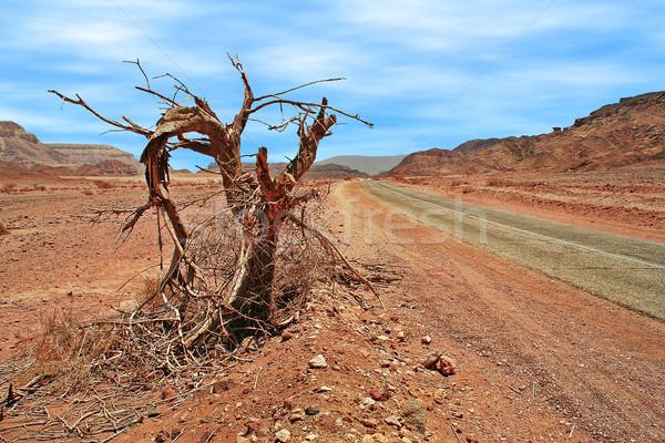 Martwe drzewa przydrożny pustyni starych wąski drogowego Zdjęcia stock © rglinsky77
