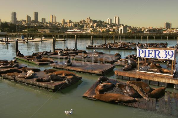 Seals on floating platform on Pier 39. Stock photo © rglinsky77
