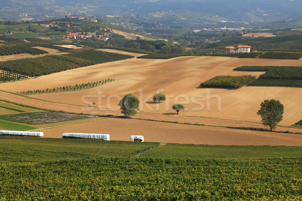 View on vineyards and fields in northern Italy. Stock photo © rglinsky77