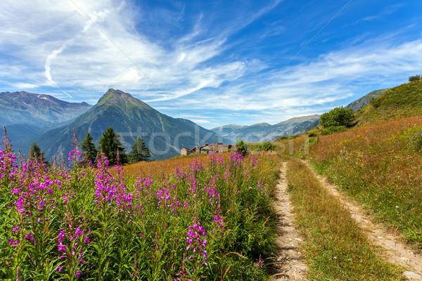 Alpine fleurs grandir rural route étroite Photo stock © rglinsky77