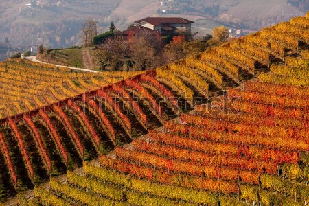 Autumnal view of vineyards in Piedmont, Italy. Stock photo © rglinsky77