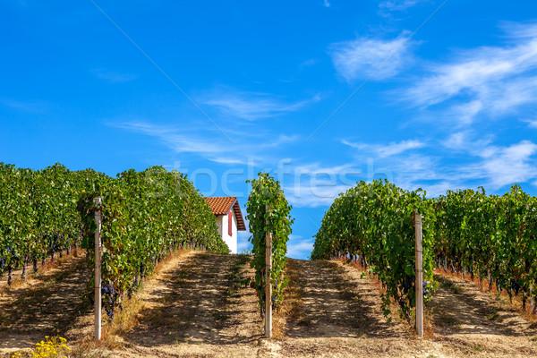 Green vineyards in Piedmont, Italy. Stock photo © rglinsky77