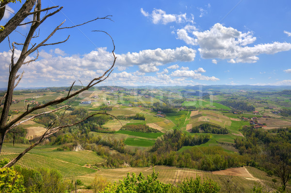 Hills of Piedmont. Northern Italy. Stock photo © rglinsky77