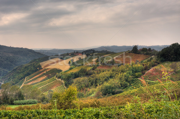 Hills and vineyards at fall. Piedmont, Northern Italy. Stock photo © rglinsky77