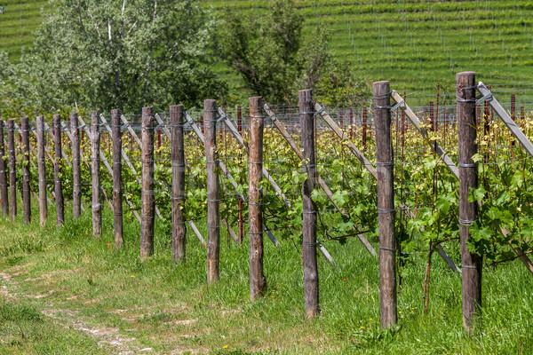 Vert rangée collines nord Italie nature Photo stock © rglinsky77
